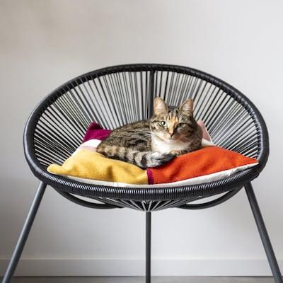 Kat in stoel